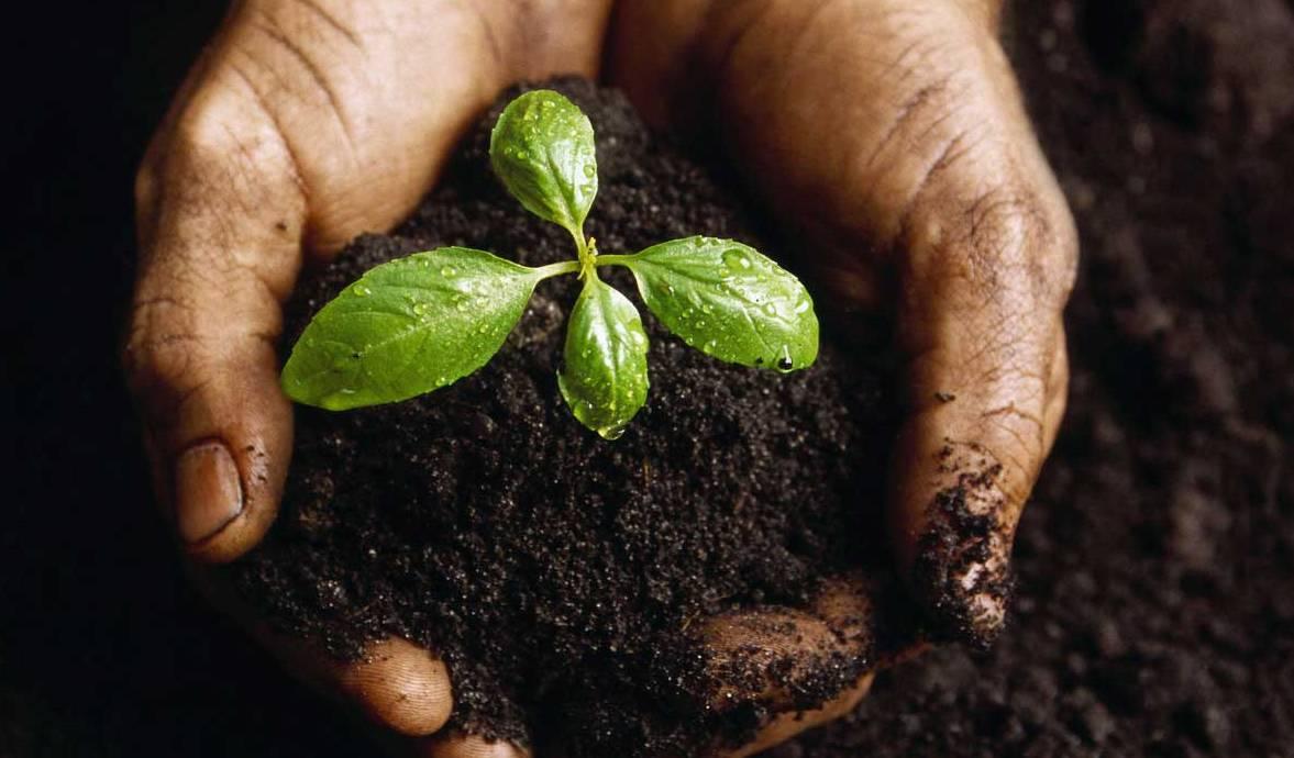 seedling[1]