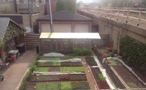 Rick Bayless Herb Garden